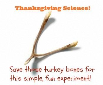 Don't toss those turkey bones! Easy Thanksgiving science