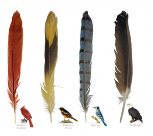Feathers: A Beautiful Look at a Bird's Most Unique Feature (Nature Appreciation)