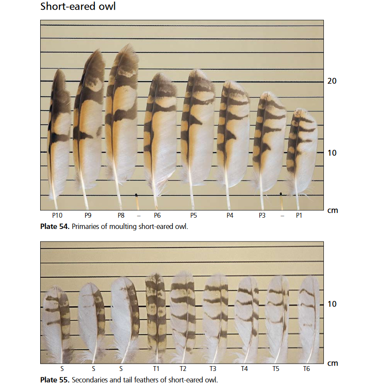 Identifying raptor feathers
