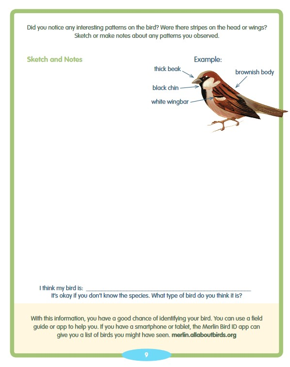 BirdSleuth free printable bird guide