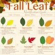 Fall Leaf ID inforgraphic