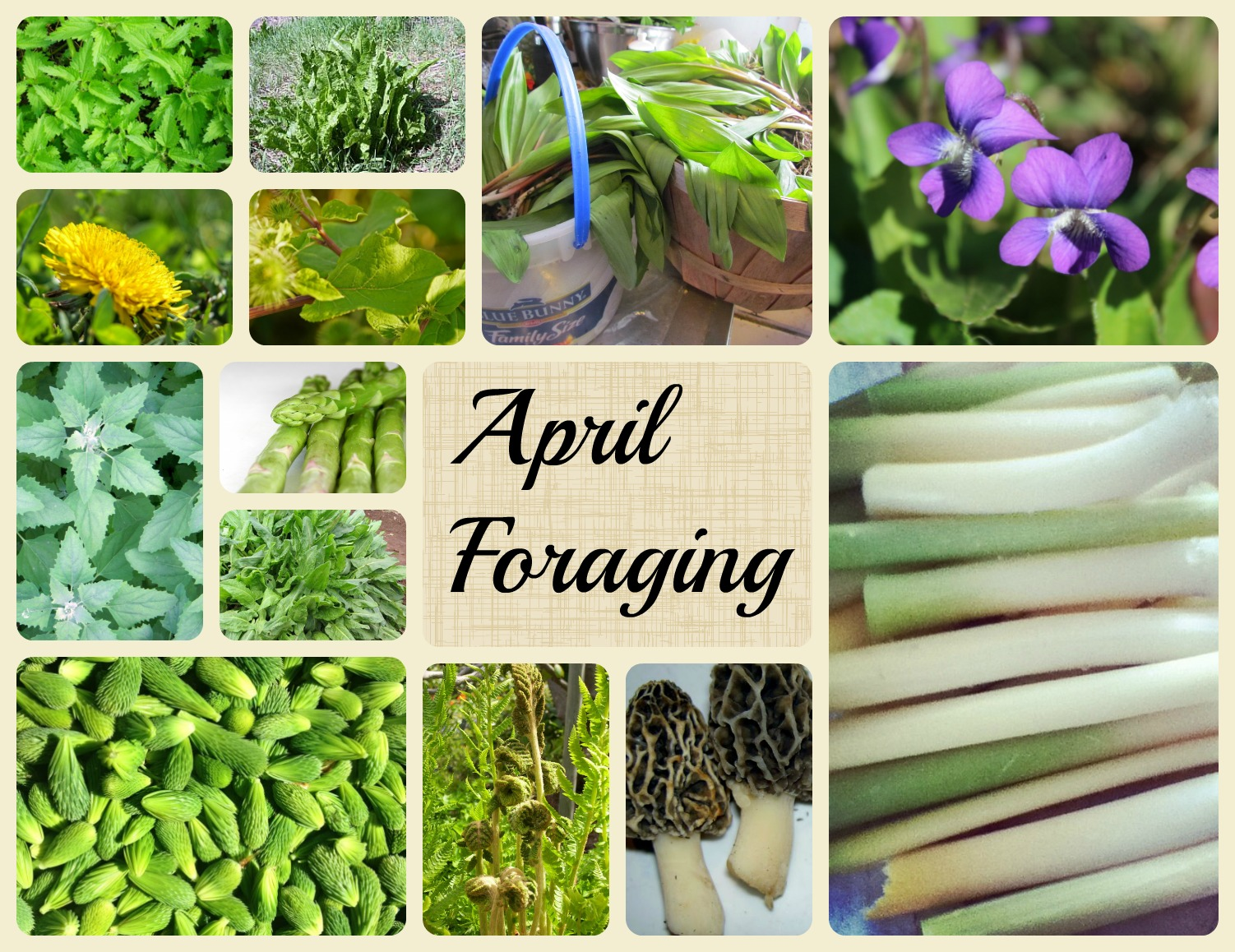 30 Wild foods to forage in April