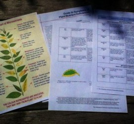 Free printable nutrient deficiency charts for your garden plants