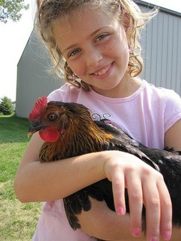 Seven benefits of backyard chickens