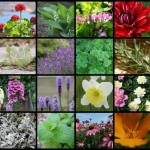 50 Deer resistant flowers, plants and herbs