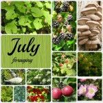 31 Wild foods to forage in July