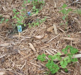 12 Great sources of natural mulch for your vegetable gardens