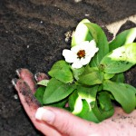 Easy, natural ways to perfect garden soil