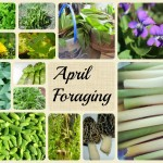 What to Forage in April