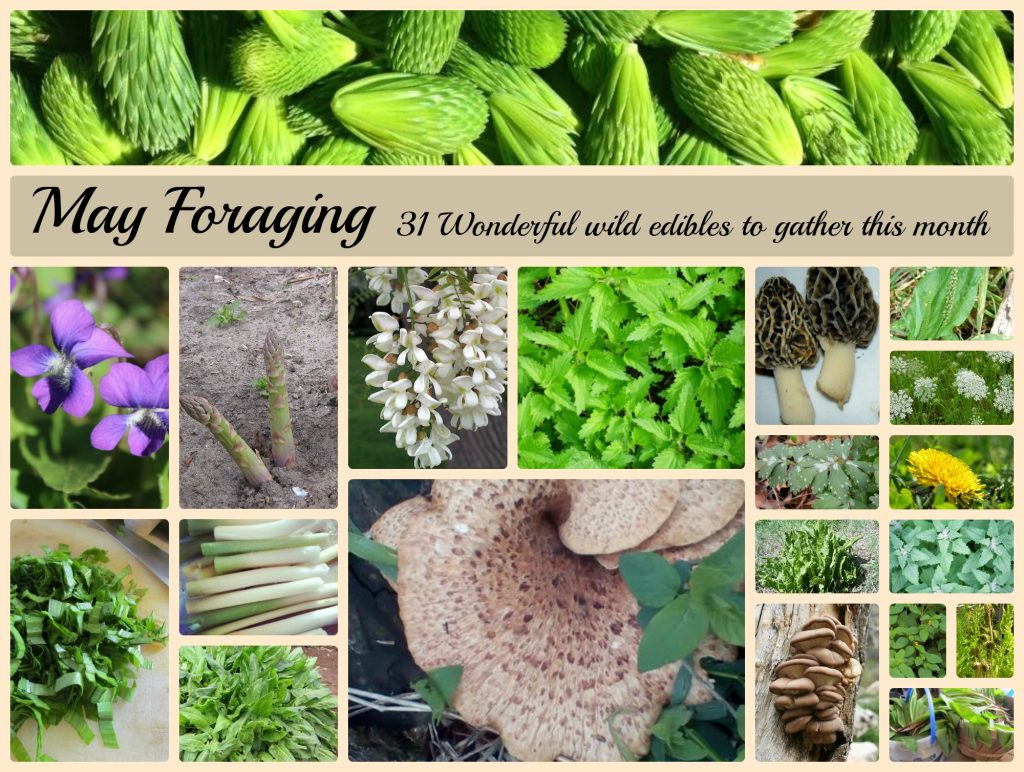 What to forage in May
