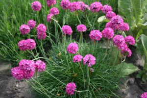 7 Plants that naturally remove lead from your soil