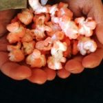 Cooking With Kids Recipe:  Sweet Flavored Popcorn