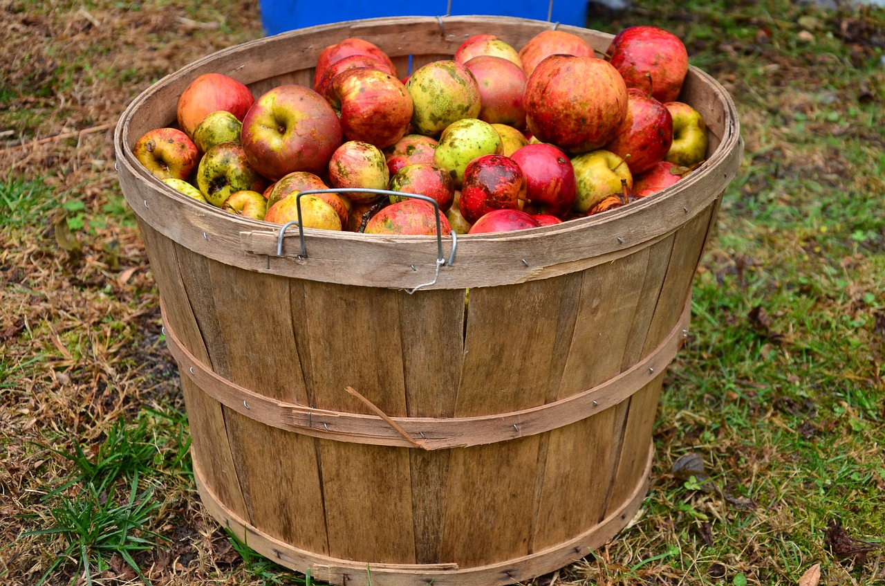 making apple cider the traditional way