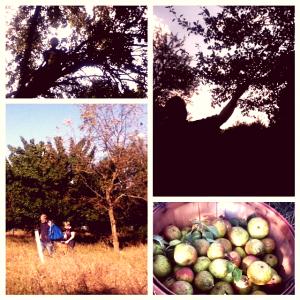 pear foraging