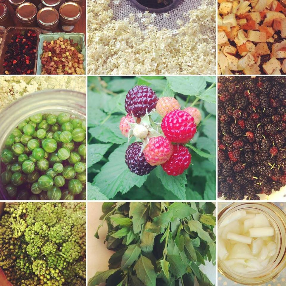 June foraging wrap up
