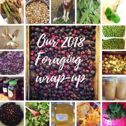 Our 2018 foraging wrap up