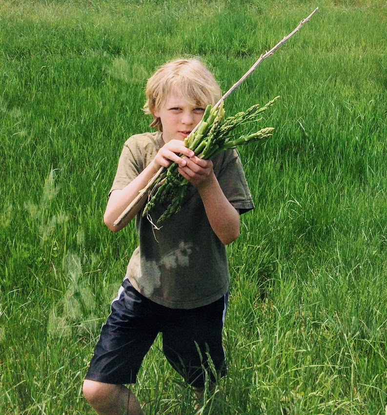 kids foraging wild asparagus