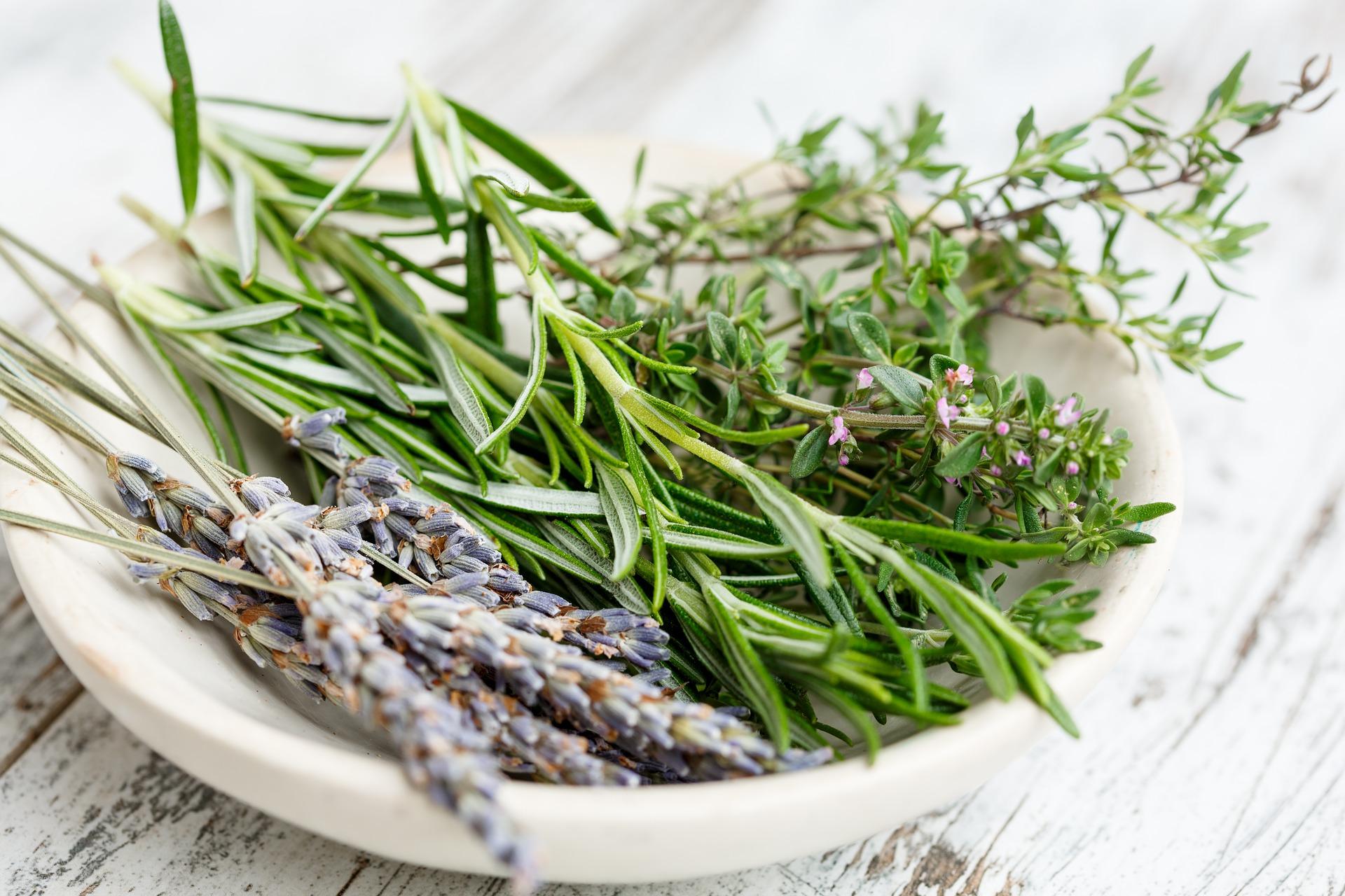 lavender herbs edible flowers