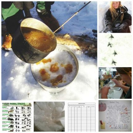 Weather trees to maple syrup candy: Science and nature fun for January