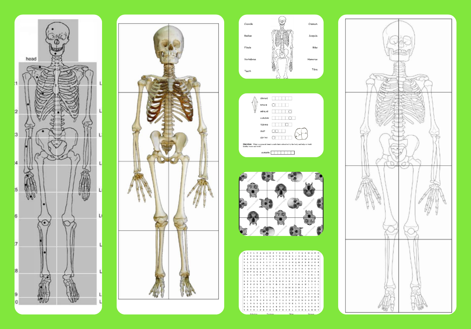 This is a picture of Life Size Printable Skeleton pertaining to grade 5