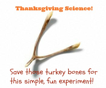 Don't toss those turkey bones! Easy Thanksgiving science
