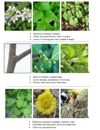 FREE printable botany plant ID cards