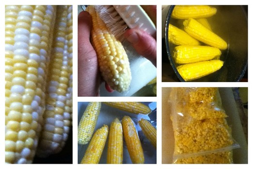 Inexpensive Corn for Freezing from Local Farms