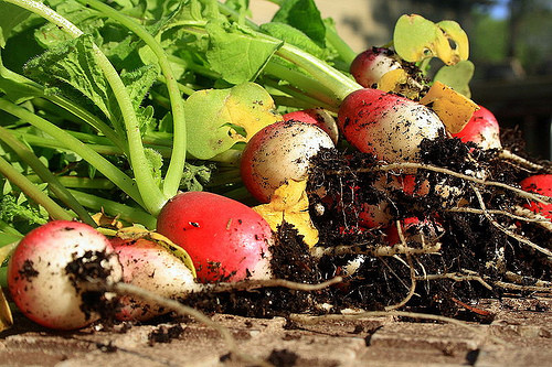 All kinds of great articles about organic gardenings that will grow in partial shade