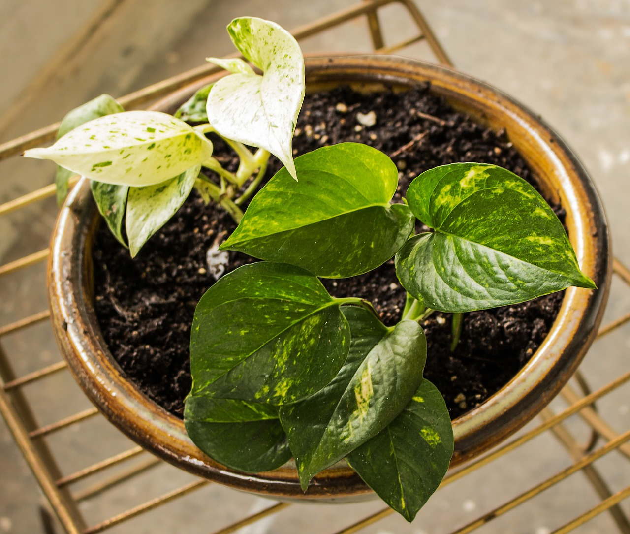 The 10 best houseplants for purifying indoor air